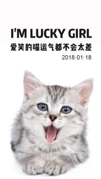 正能量猫粮
