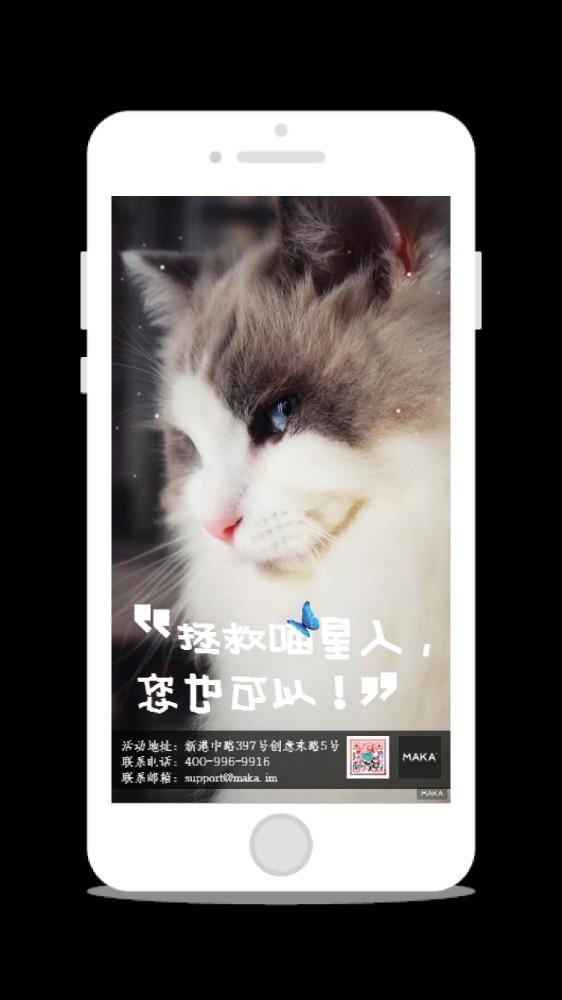 猫咪/宠物猫公益活动海报/宠物店促销海报
